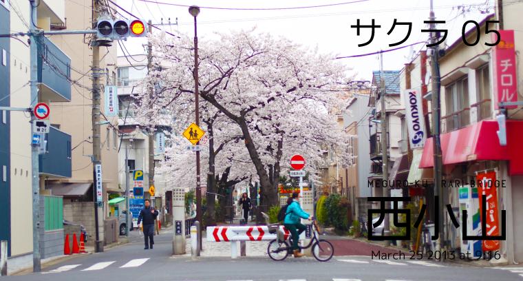 2013sakura_nishikoyama
