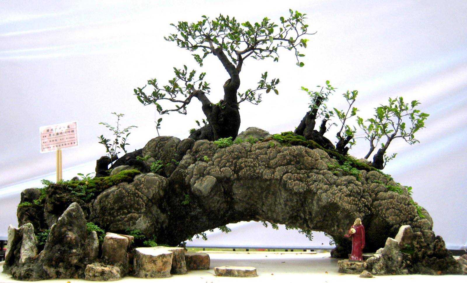 bonsai-06